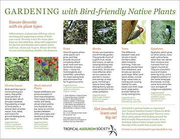 Audubon_Gardening-for-birds_2.jpg