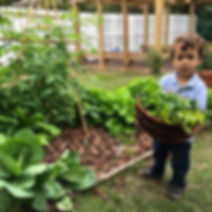 Organic garden at Village Montessori