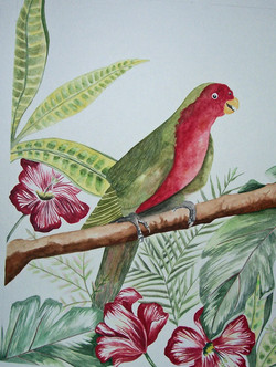 Parrot 1 in Follage