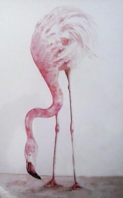 Pink Ostrich