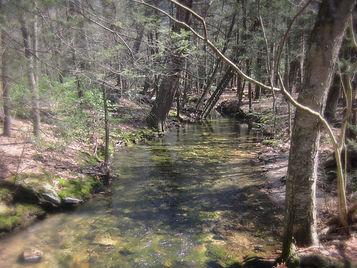 Hemlock lined stream in Tuscarora State Forest