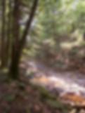 Meadow Branch Creek
