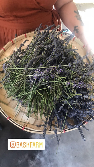 Magpie Alchemy Lavender from Bask Farm