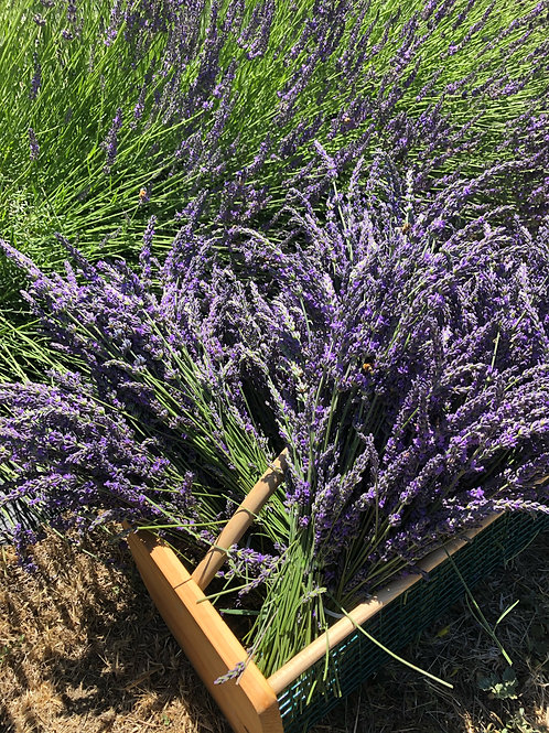 Lavender - Fresh French Bundle