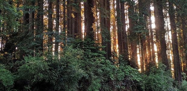 redwoods%20sunset_edited.jpg