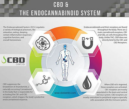 Endo System.jpg