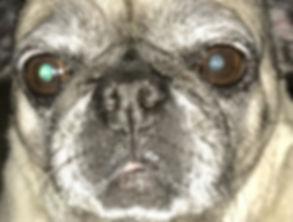 Kameron Richter pug bug eye