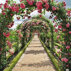 roses-2245612_1920.jpg