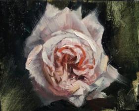 Single rose - Oil on linen