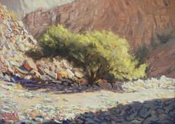 Sunlit trail - oil on linen