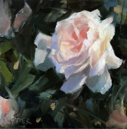 Rose study - Oil on linen