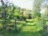 MON_edited.jpg