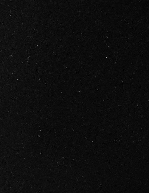 MEXICOLOGY black.jpg