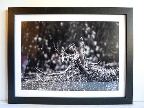 """Cadre Photo 45x34cm """"Le Danseur #2"""""""