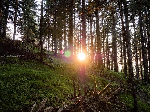 Couché de soleil en forêt