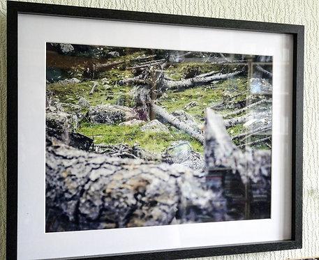 """Cadre Photo 50x40cm """"Déracinés"""""""