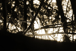 Dans l'ombre...