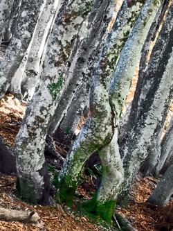 Rebellion d'arbres