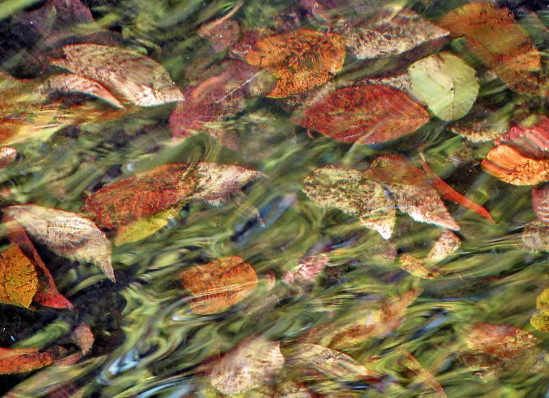 Feuilles d'automne à la dérive