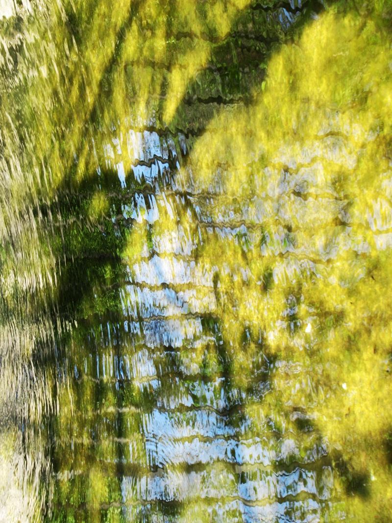 Ecailles verdâtres
