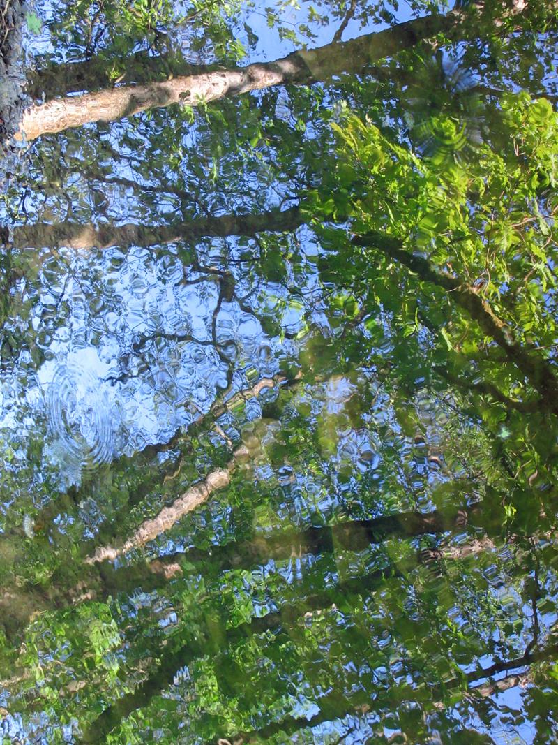 Reflets impressionnistes