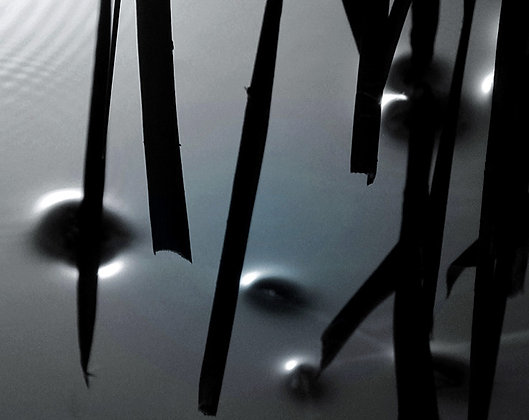 Feuillage noir
