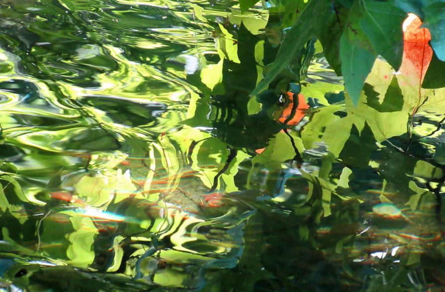 Reflets de l'étang
