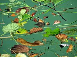 feuilles en suspension