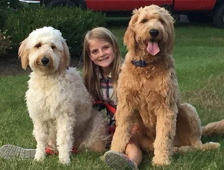 Goldendoodle Puppies For Sale | NY | Saratoga Goldendoodles