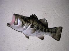 Black Bass 31cm