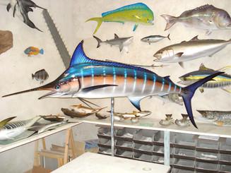 Marlin bleu 260cm