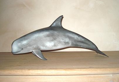 Dauphin de Risso 50cm