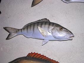 Marbré 39cm