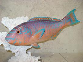 Poisson perroquet 41cm