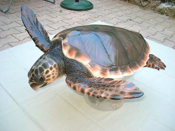 Tortue caouanne 80x75cm