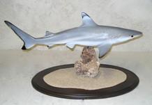 Requin pointes noires 67cm