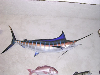 Marlin bleu 200cm