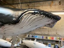 Baleine à bosse 2m (2)