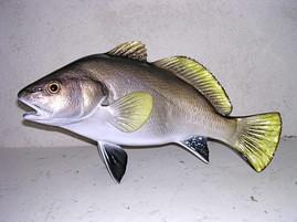 Corb 43cm