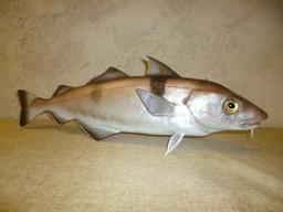 Eglefin 65cm