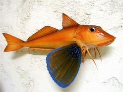 Grondin perlon 50cm