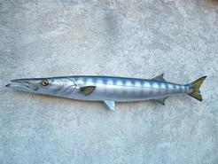 Barracuda 124cm