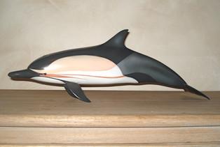 Dauphin commun 50cm