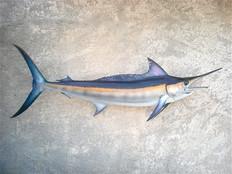 Marlin noir 160cm