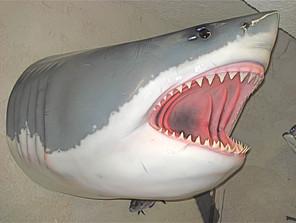 Requin grand blanc 130cm (tête)