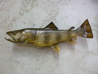 Truite fario 57cm