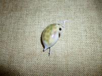 Daphnie 3cm
