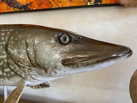 sculpture moulage préparation peinture capvert cap vert brochet décoration poisson résine polyester