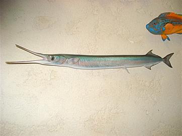 Orphie 85cm