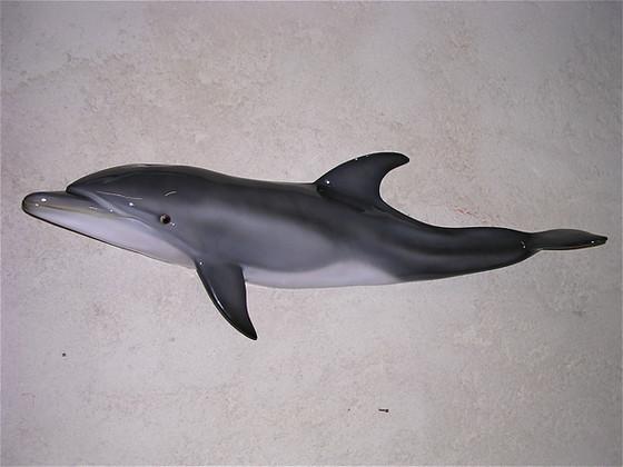 Grand dauphin 85cm